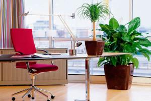 Преображение офиса для процветания бизнеса